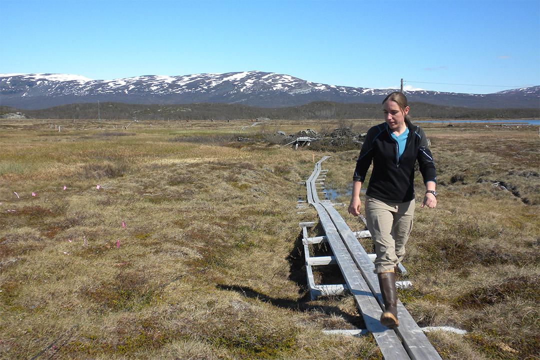 researcher walking through grasslands in Sweden.