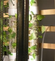 Living Walls: University researchers develop green tech for treating wastewater from microbreweries