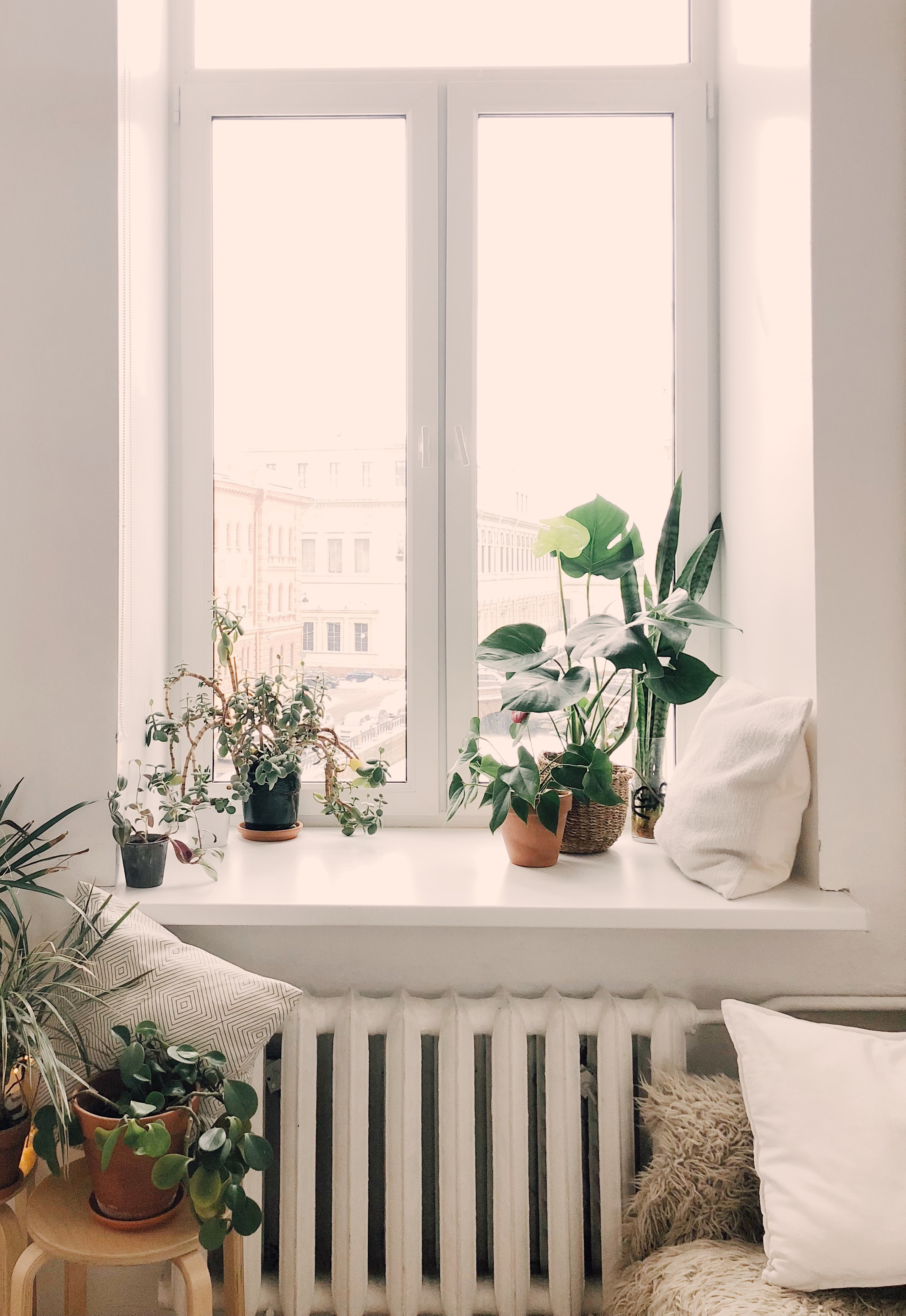Window surrounded by plants