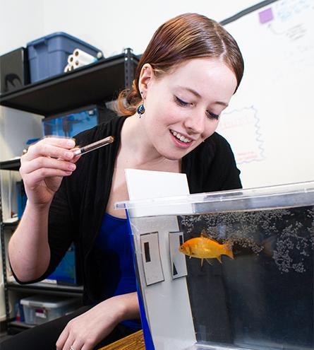 Fish Cognition Experiment