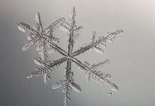 Greeting Cards: Snowflake Photomicrographs by Professor Michael Peres