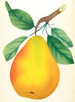 Greeting Cards: Fruit