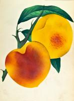 Greeting Cards: Fruit, series 2