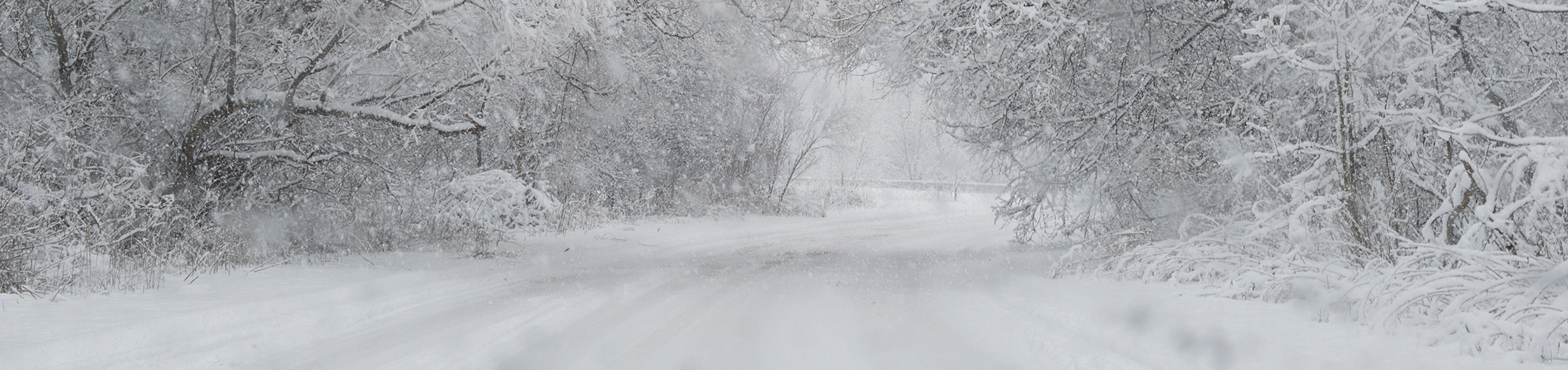Snow-covered road flanked by snow-covered trees.