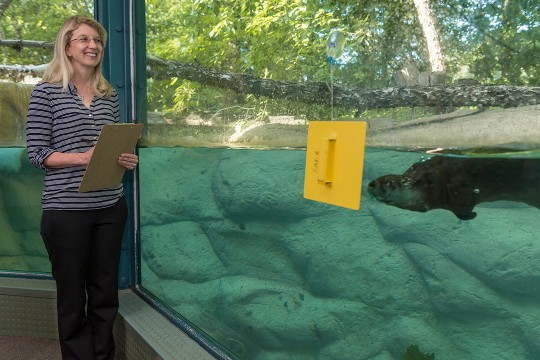 Woman stands with clipboard in front of the otter exhibit at Seneca Park Zoo.