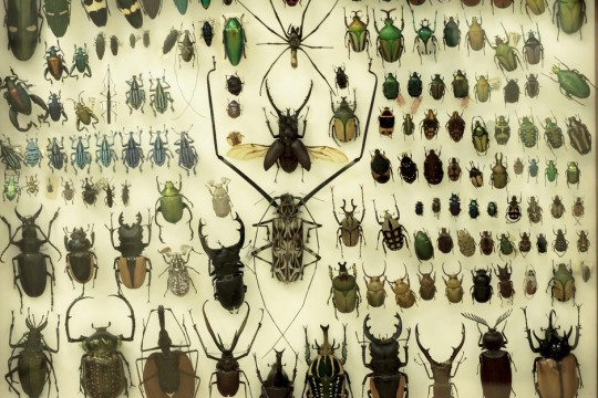 Collection of various types of bugs.