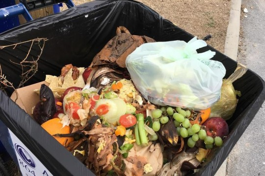 Food scraps in garbage tote.