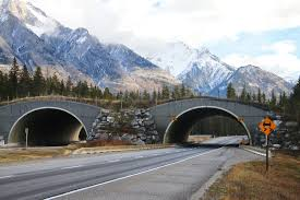 landscape photo of a wildlife crossing over a highway in Banff park in Canada